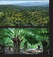 ksth_about_palmtree